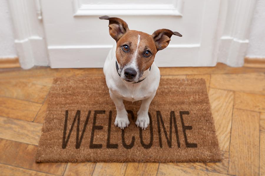 معرفی سگ جدید به خانه