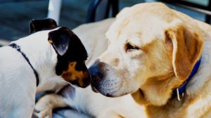 معرفی سگ جدید به سگ