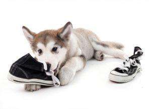 درمان مشکلات رفتاری سگ ها