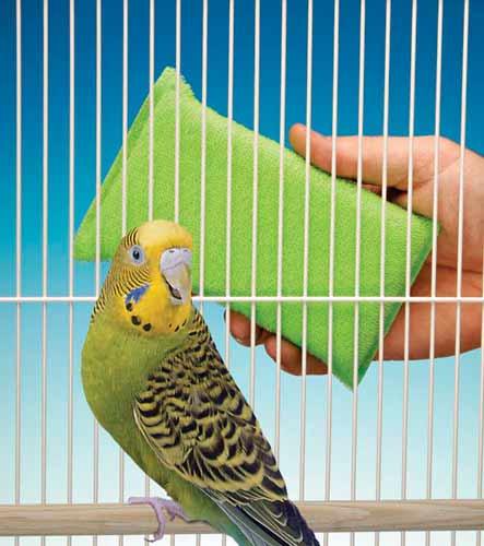 موارد و لوازم مورد نیاز پرنده