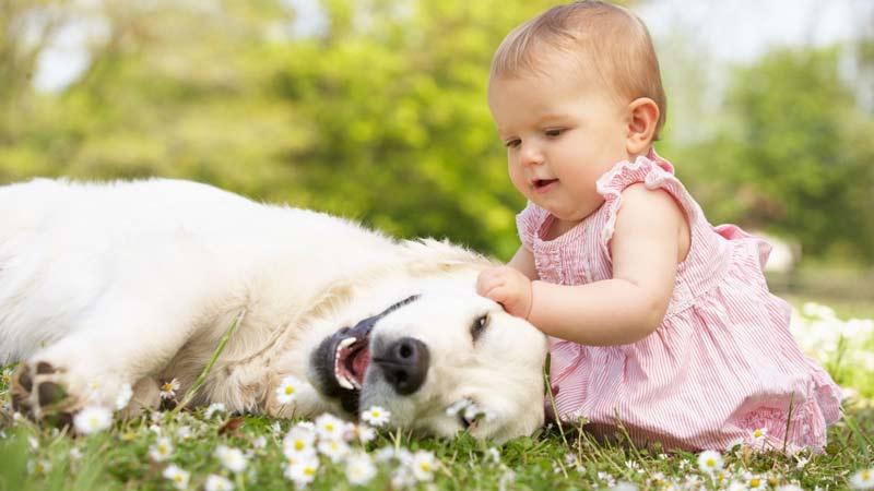 تنها گذاشتن کودکان با حیوان
