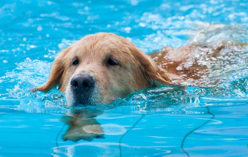 تابستانی خوب برای سگ ها