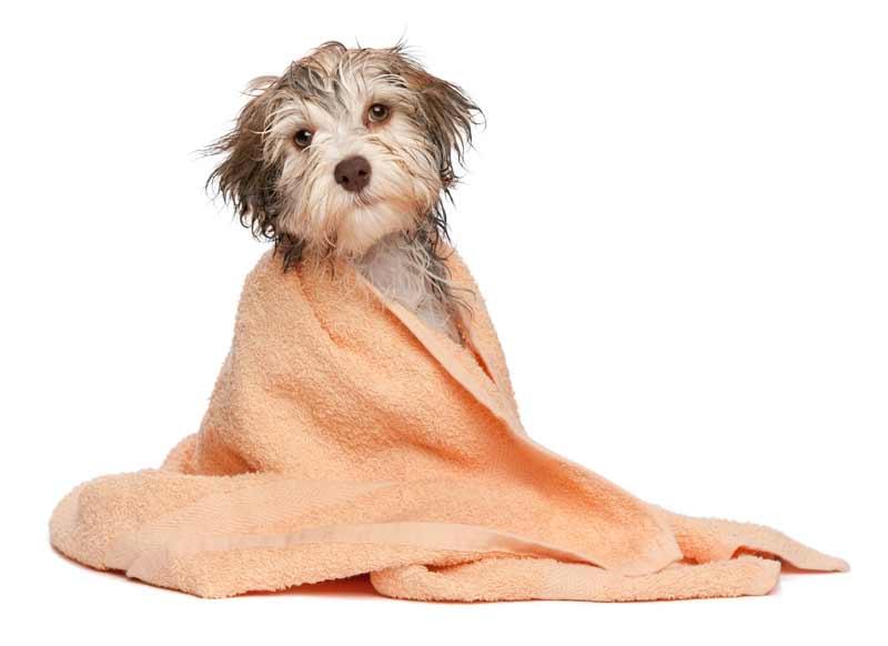 نظافت سگ
