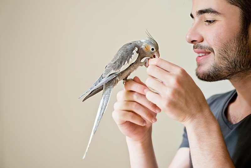 اضافه کردن پرندهی جدید