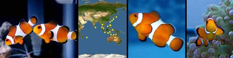 ماهی های مناسب برای افراد مبتدی در آب شور (قسمت اول )