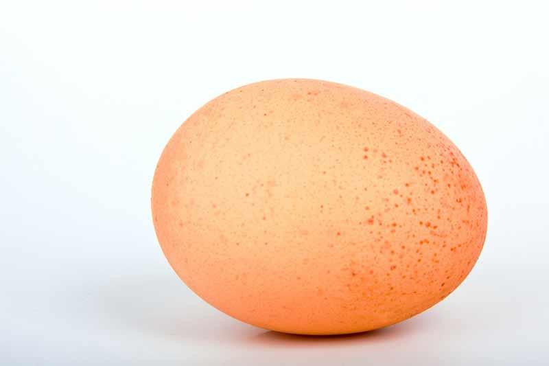 گربه و تخم مرغ خام
