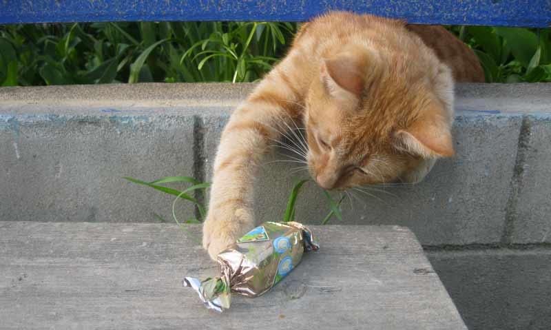 گربه و آبنبات