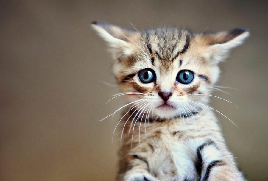 هفته دوم بچه گربه
