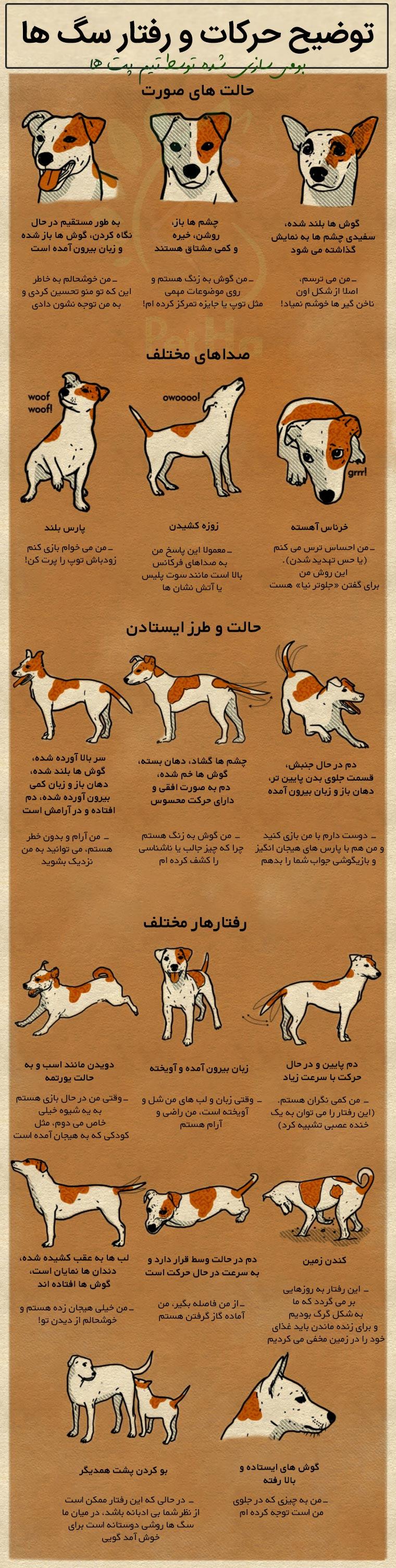 اینفوگرافیک توجیه رفتار سگ ها