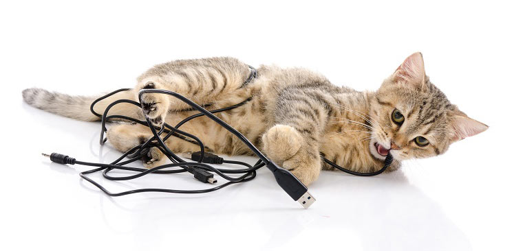 اشیا خطرناک برای گربه