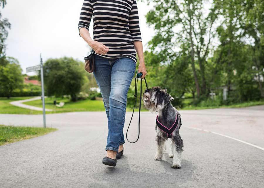 آموزش همراه من سگ