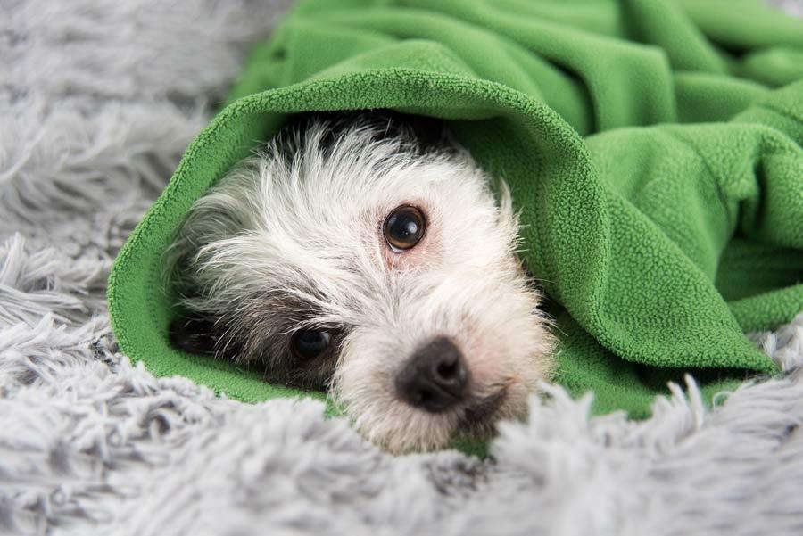 مکانی گرم سگ