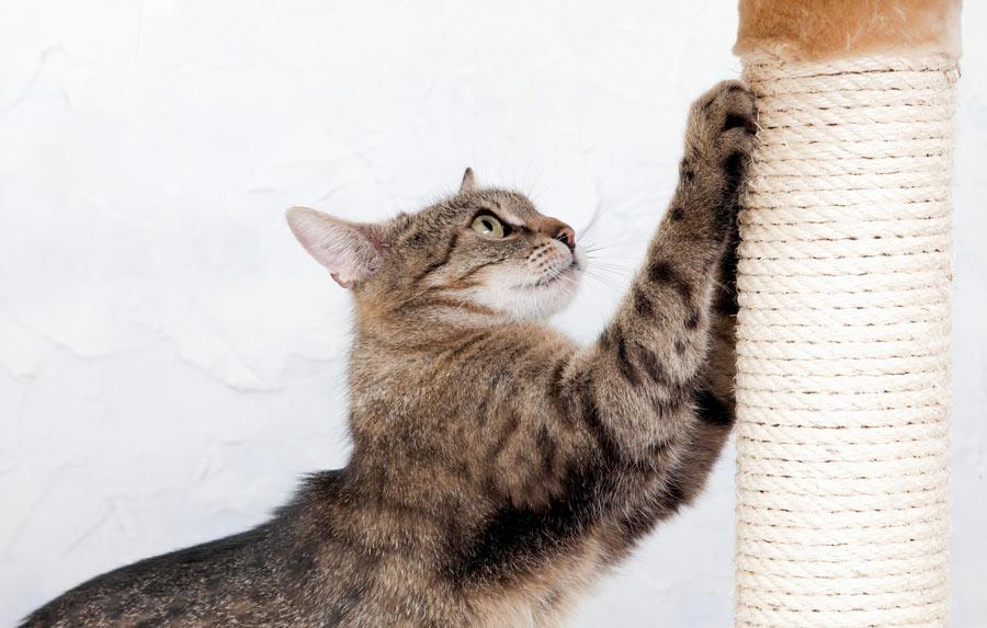 چنگ زدن گربه