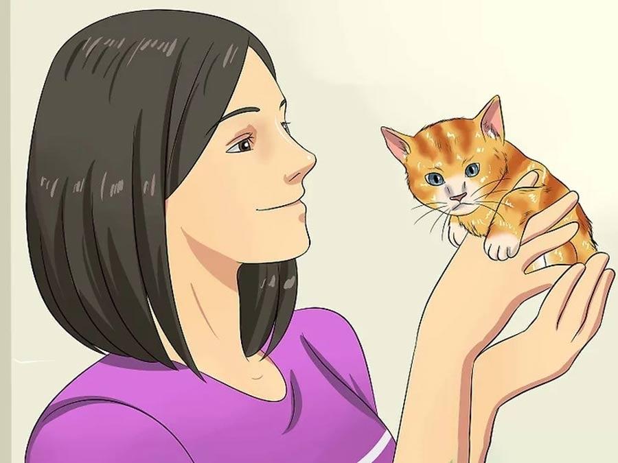 ادامه اجتماعی کردن گربه