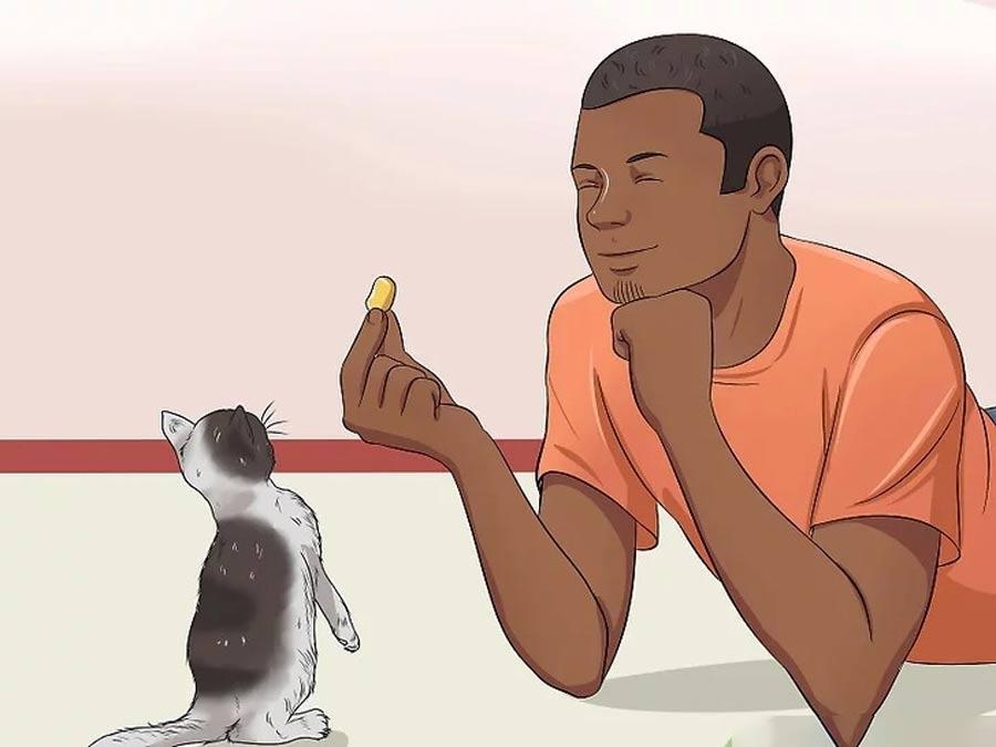 صبر با بچه گربه