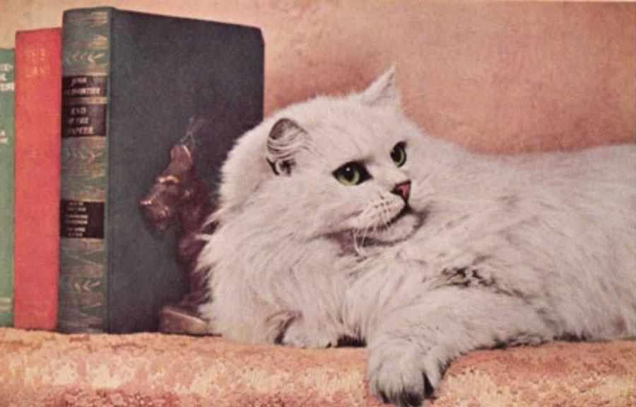 تاریخچه گربه پرشین