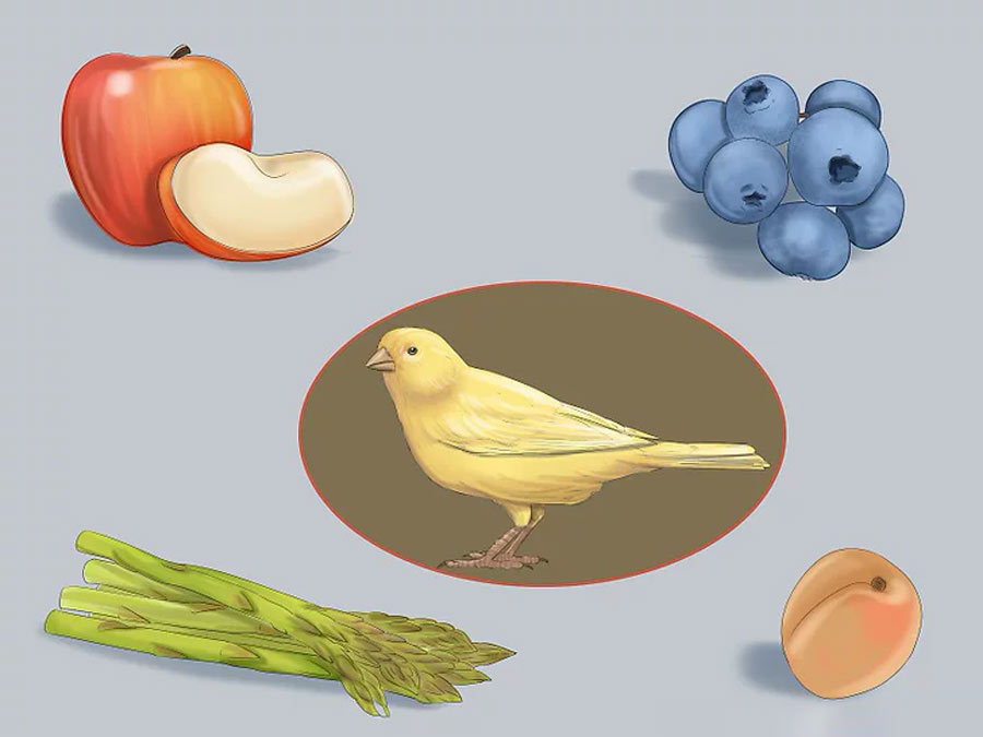 میوه و سبزیجات برای قناری
