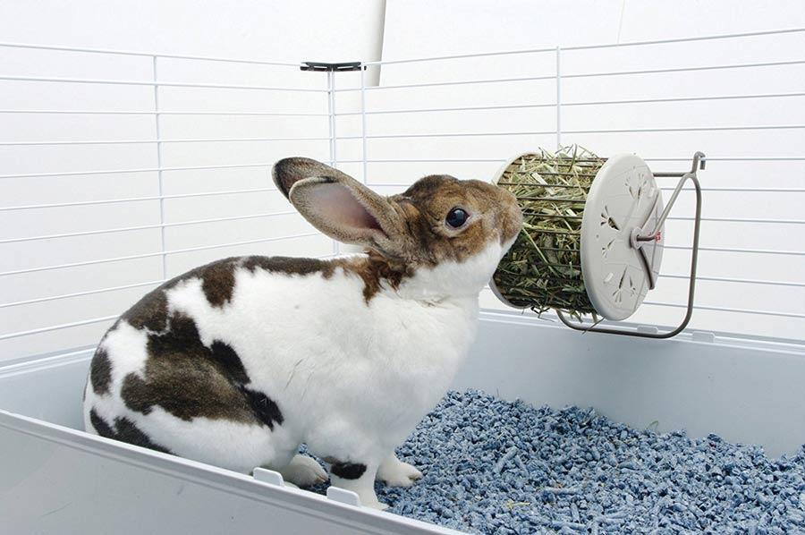 علف خرگوش