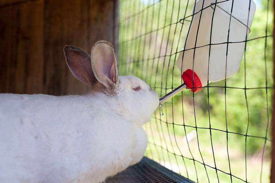 تامین آب خرگوش