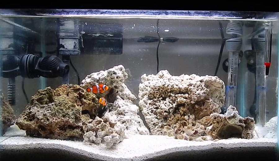 تانک دلقک ماهی