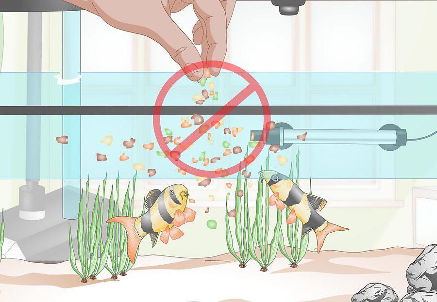 اجتناب از غذا دادن بیش از اندازه به ماهی ها