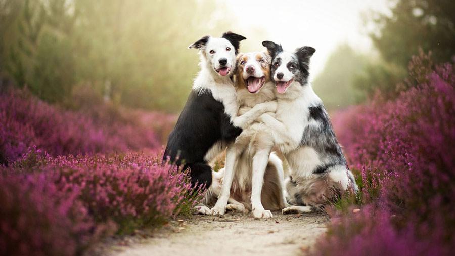 سگ خوشحال