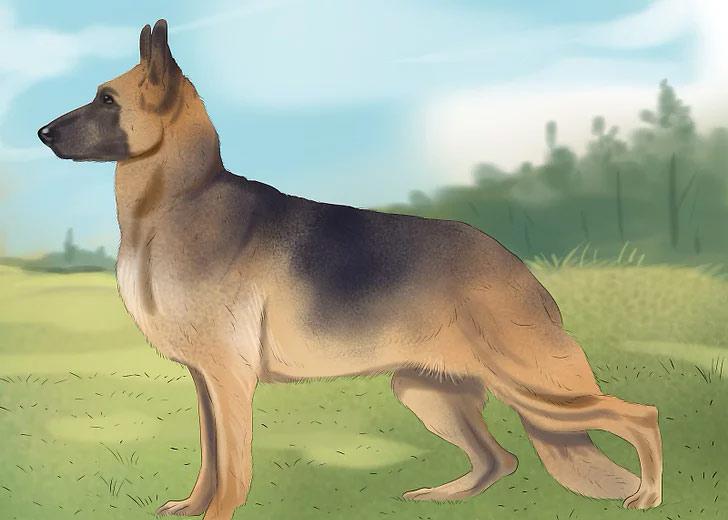 توجه به مشکلات تحرکی و نحوه بلند شدن سگ