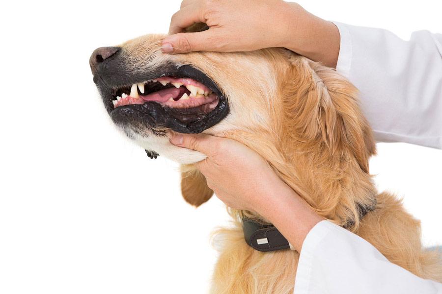 آسیب دهان سگ