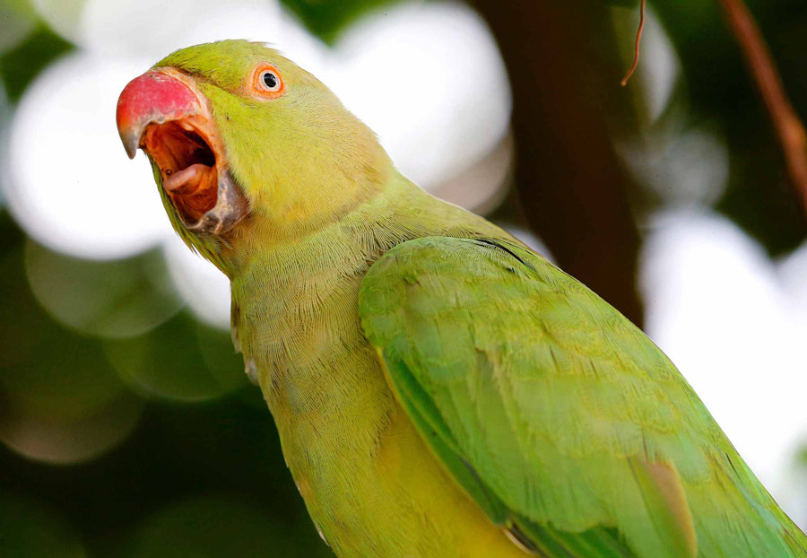 تغییر صدای پرنده