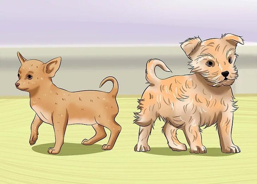نیازها و رفتارهای خاص نژاد سگ خود را بشناسید