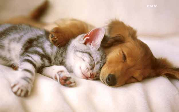 Happy-dog-and-cat