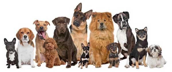 انواع گونه های سگ ها