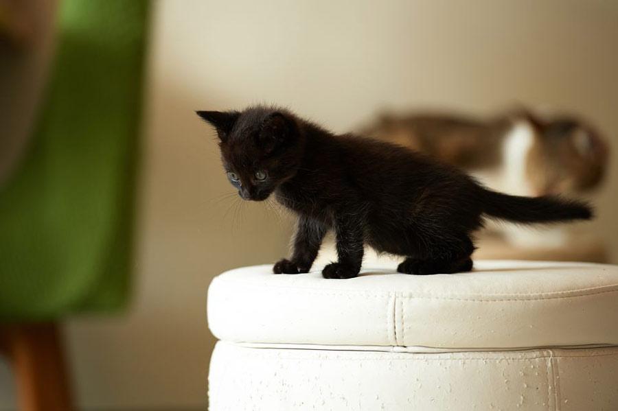هفته چهارم بچه گربه