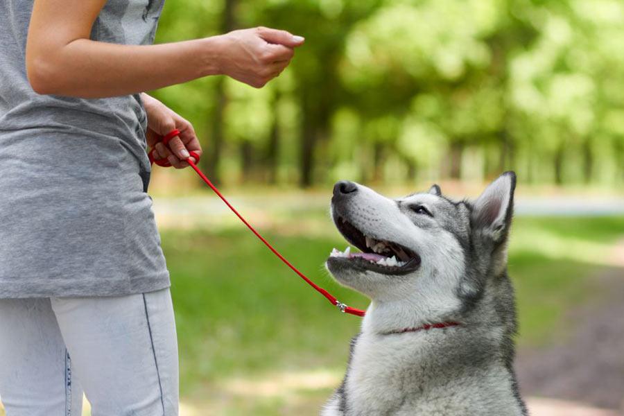 فرمان نگاه سگ