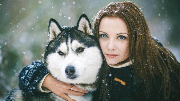 آشنایی با نژادهای سگ: هاسکی