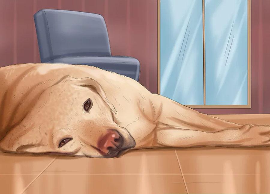 توجه به میزان انرژی سگ