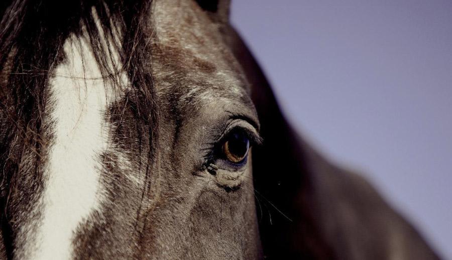 چشم اسب پیر