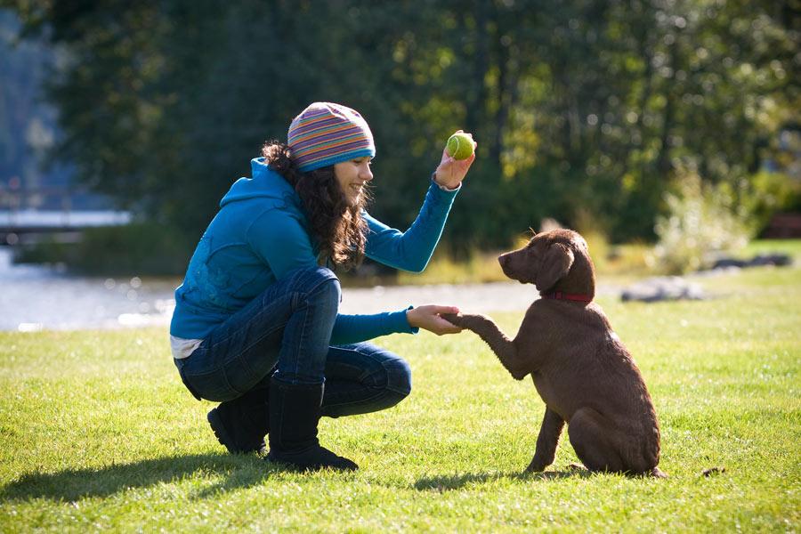 آموزش فرمان ماندن و ایست سگ