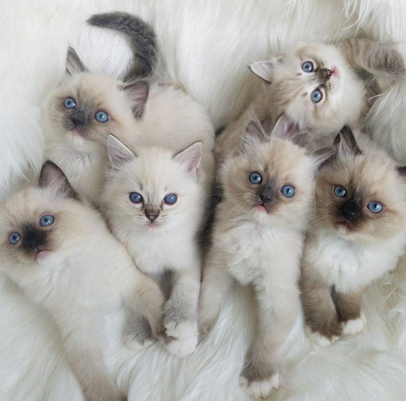 گربه 20 مورد لازم در رابطه با نگهداری از گربه ها - مجله اینترنتی پت ها
