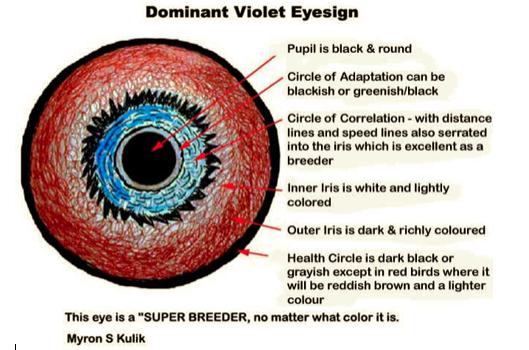 چشم کبوتر پلاکی