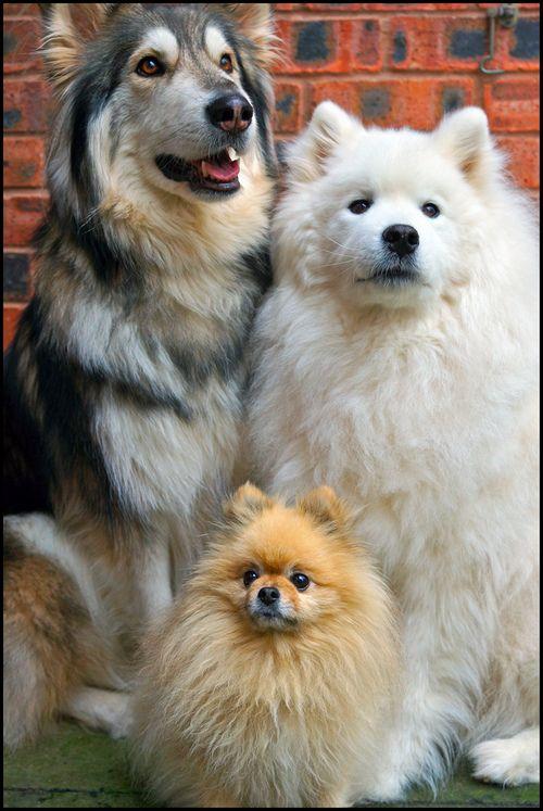 رابطه سگ پامر با بقیه سگ ها
