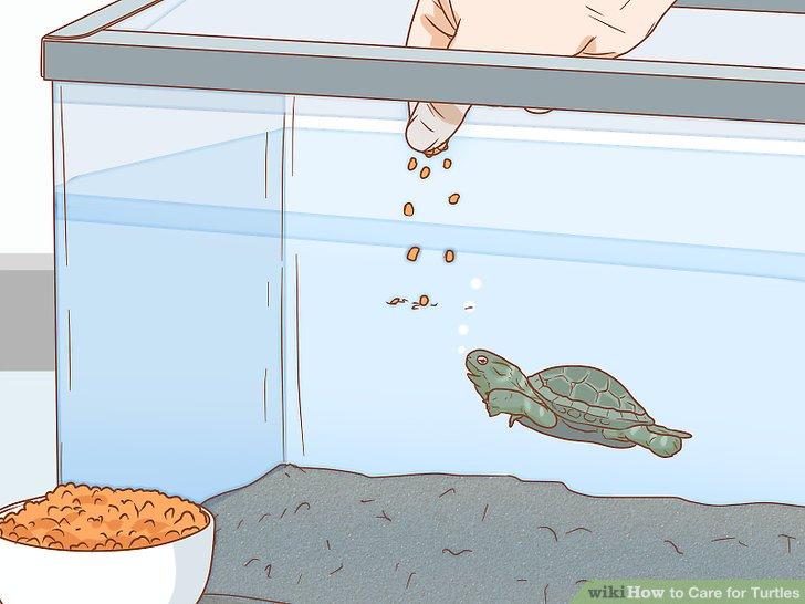 غذا دادن به لاک پشت