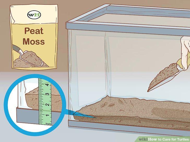 خزه یا خاک در محل نگهداری لاک پشت