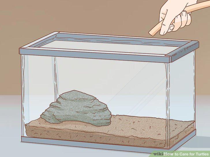 اضافه کردن آب به محل نگهداری لاک پشت