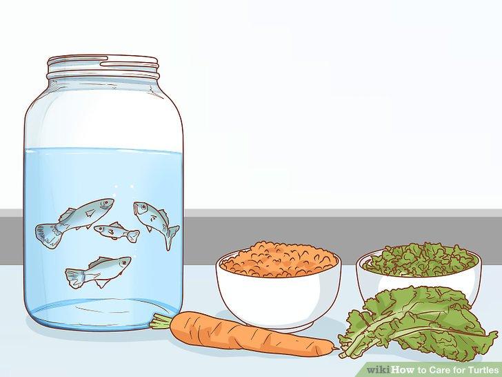 ماهی و سبزیجات برای لاک پشت