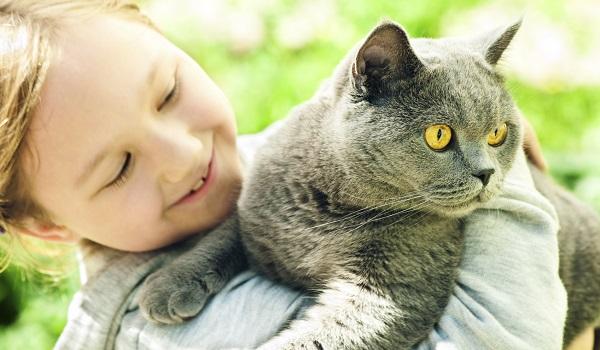 رابطه کودک و گربه بریتیش شورت هیر