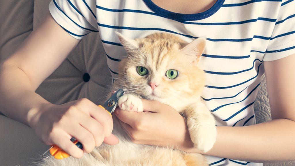 گرفتن ناخن گربه با دقت