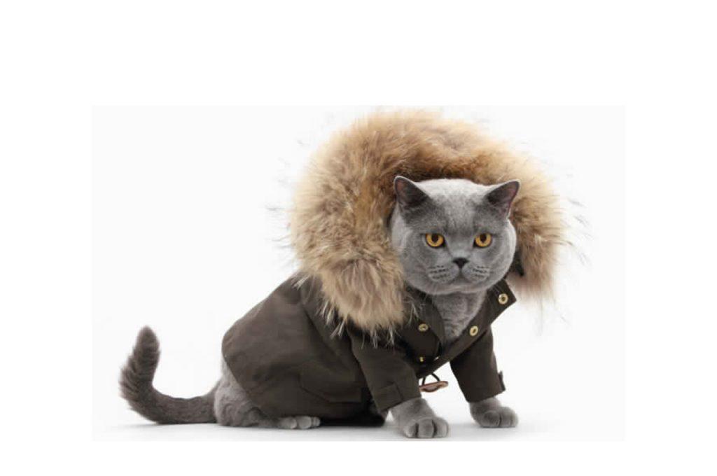 کاپشن گربه