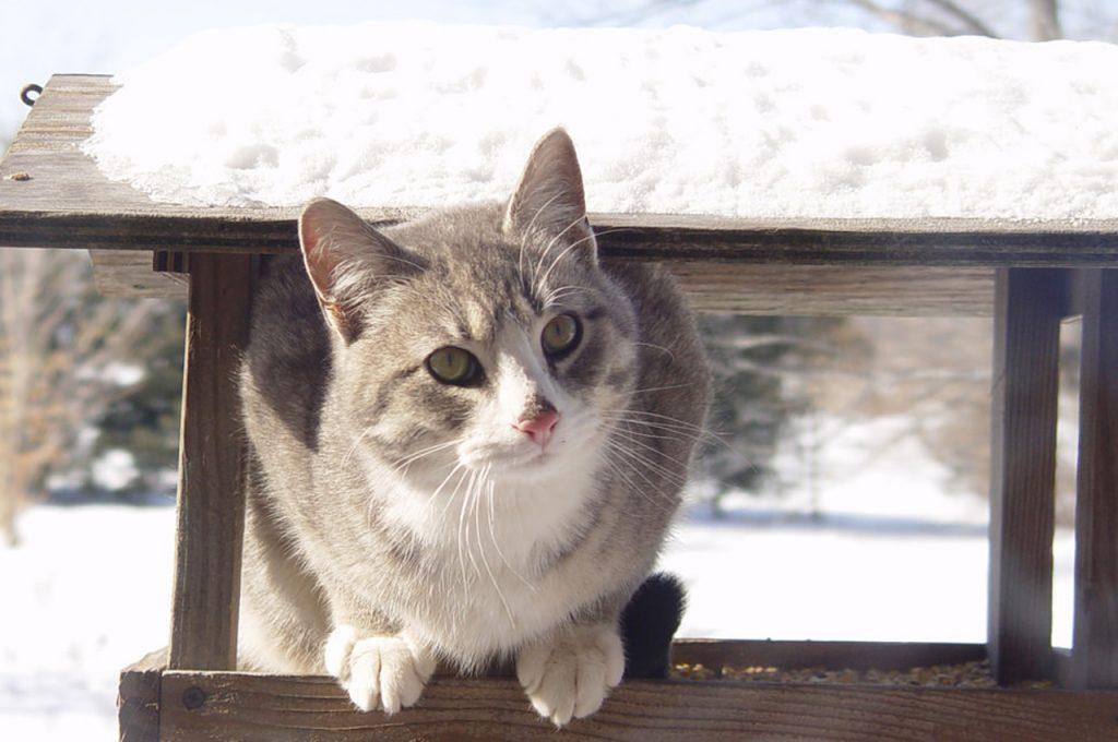 گربه در سرمای بیرون از خانه