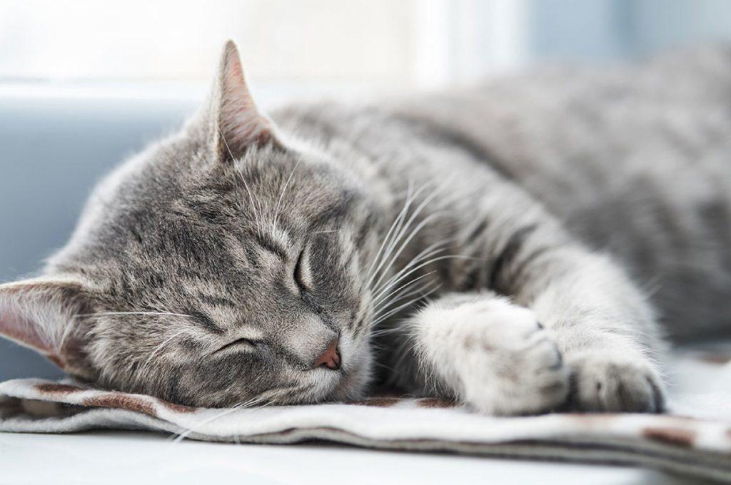 گربه خوابیده در زمستان